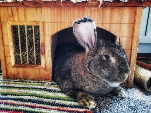 David & Melanie's bunny
