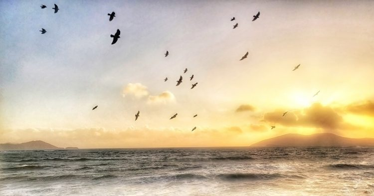 Birds flying free patterns against a sunset over the Ocean in Southern Ireland