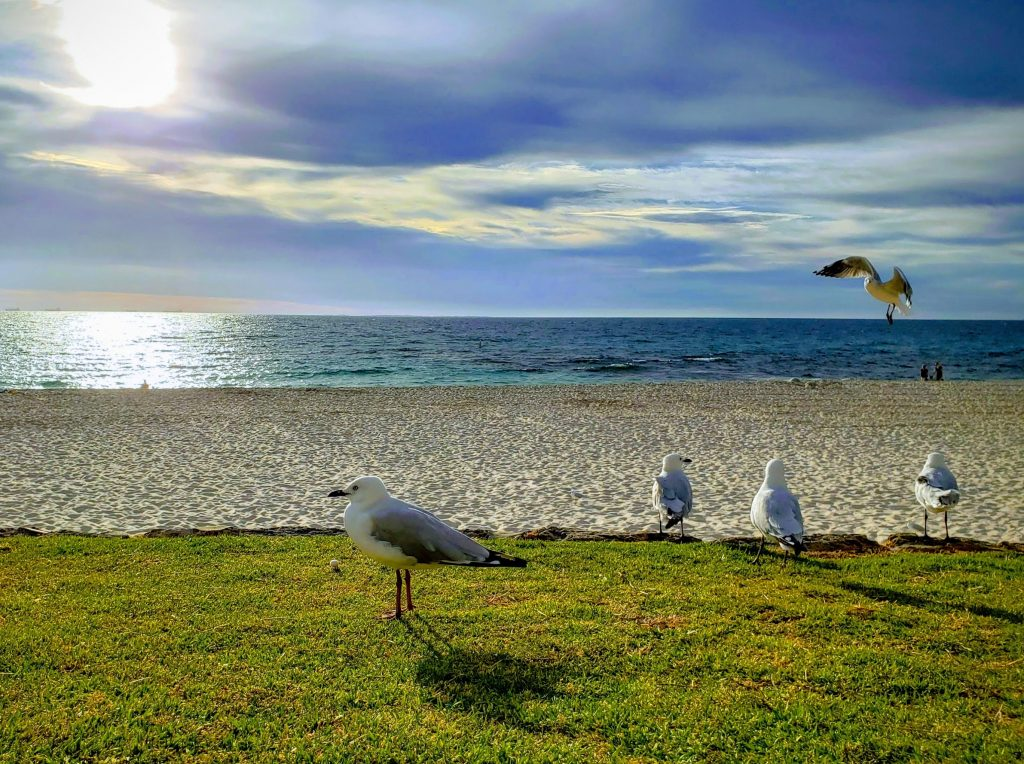Seagulls flying free over the beach in Australia no anxiety